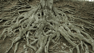 The branches of yggdrail run with the sap of magic, and touch all Nine Realms